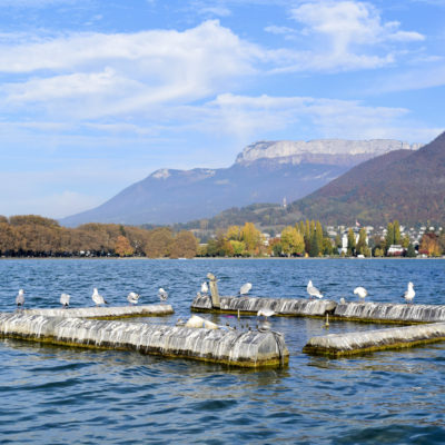 Birds on Lac d'Annecy