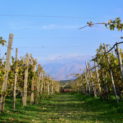 lyrarakis-vineyards