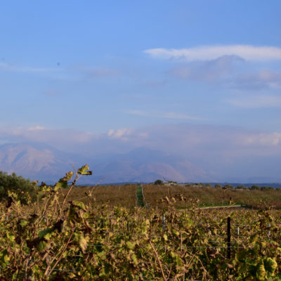 lyrarakis vineyards
